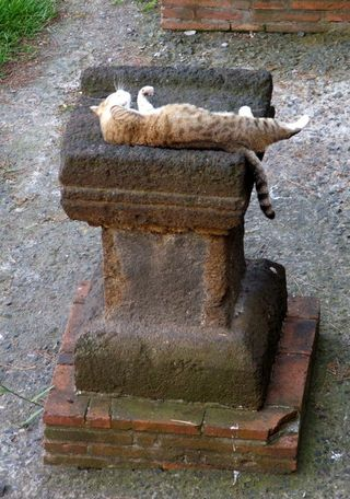 Protestant_cemetery_cat_relaxing_on