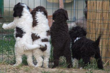Cuccioli-retro